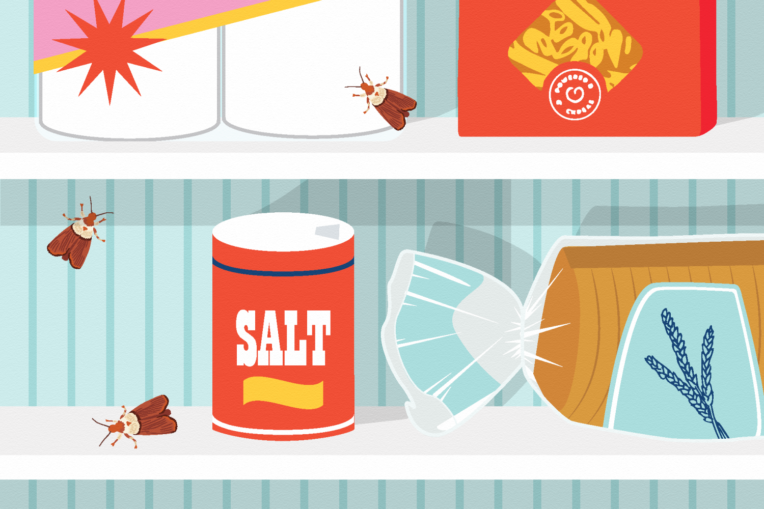 Our 4-Step Guide for Getting Rid of Pantry Moths