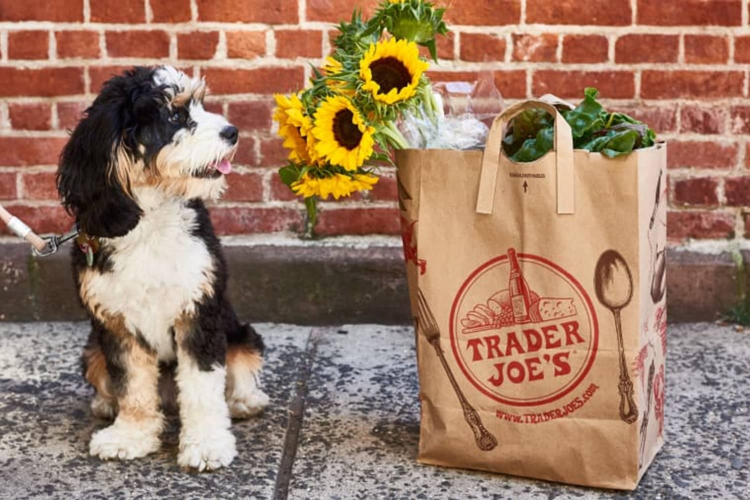 Trader Joe's Has Little Planters That Look Like People for Just $6