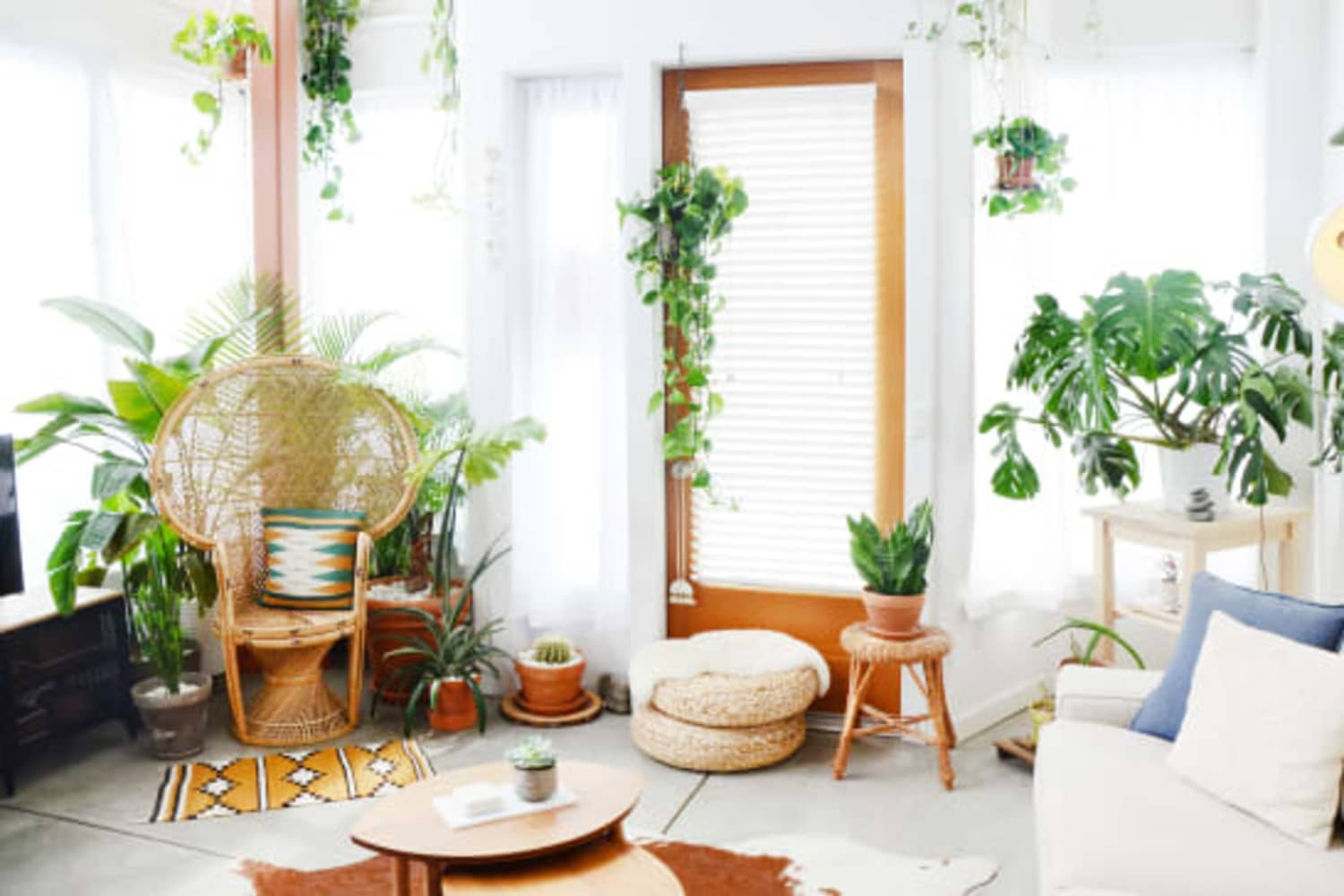 6 Fragrant Houseplants That Will Make Your Home Smell Incredible