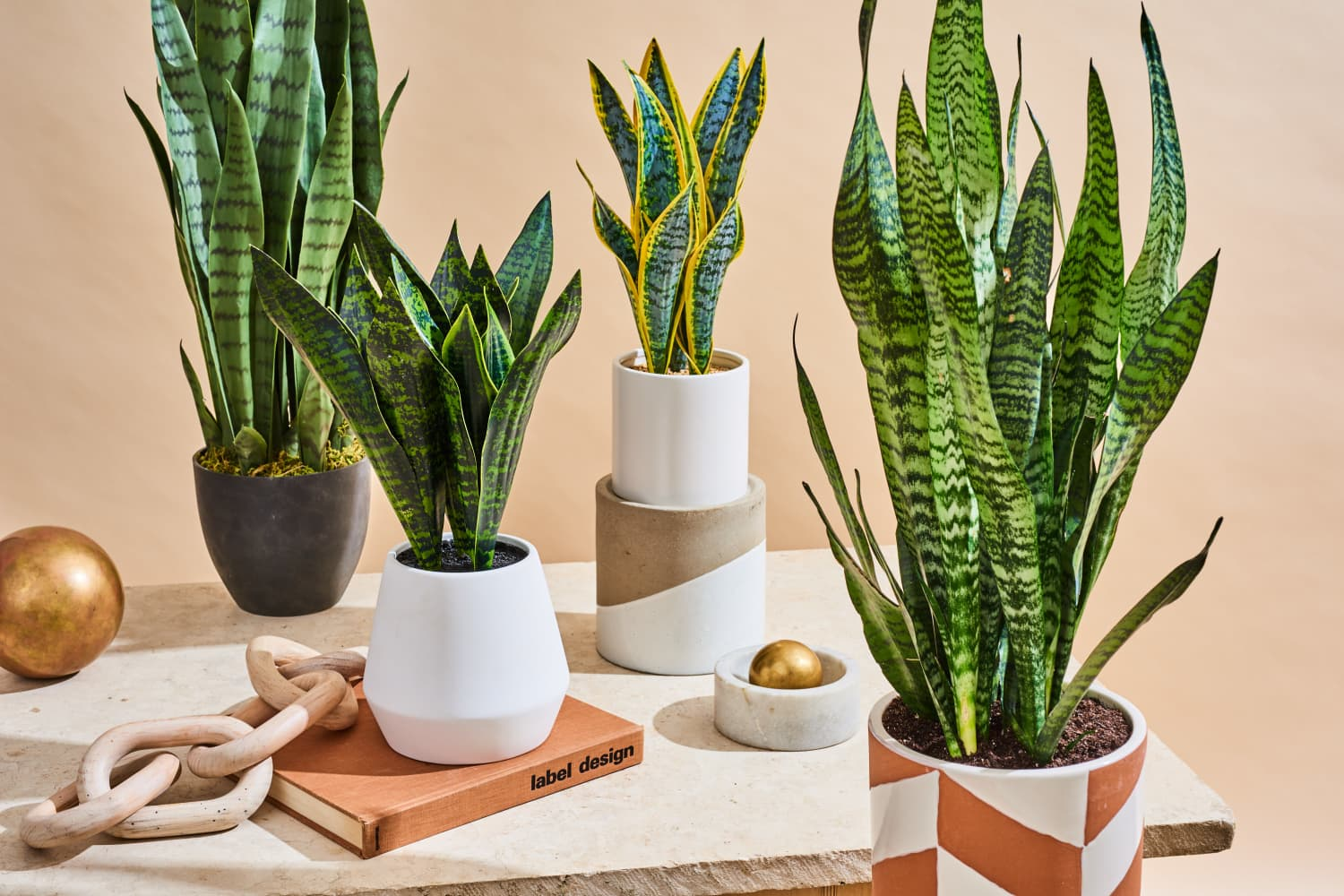 The Best Fake Snake Plant With Comparison Photos Apartment Therapy