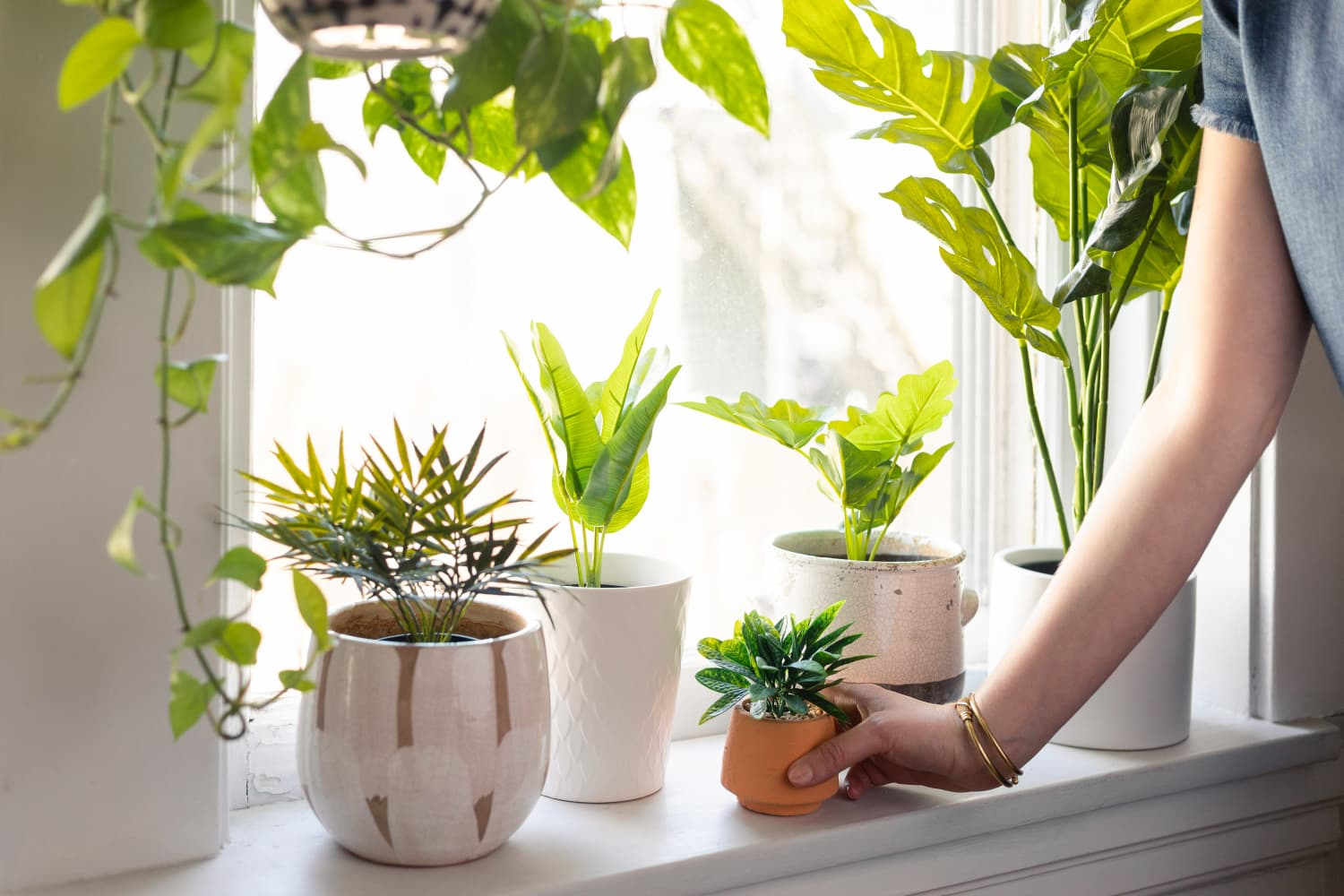 7 Windowsill Plants That Bring Big Style to Small Spaces