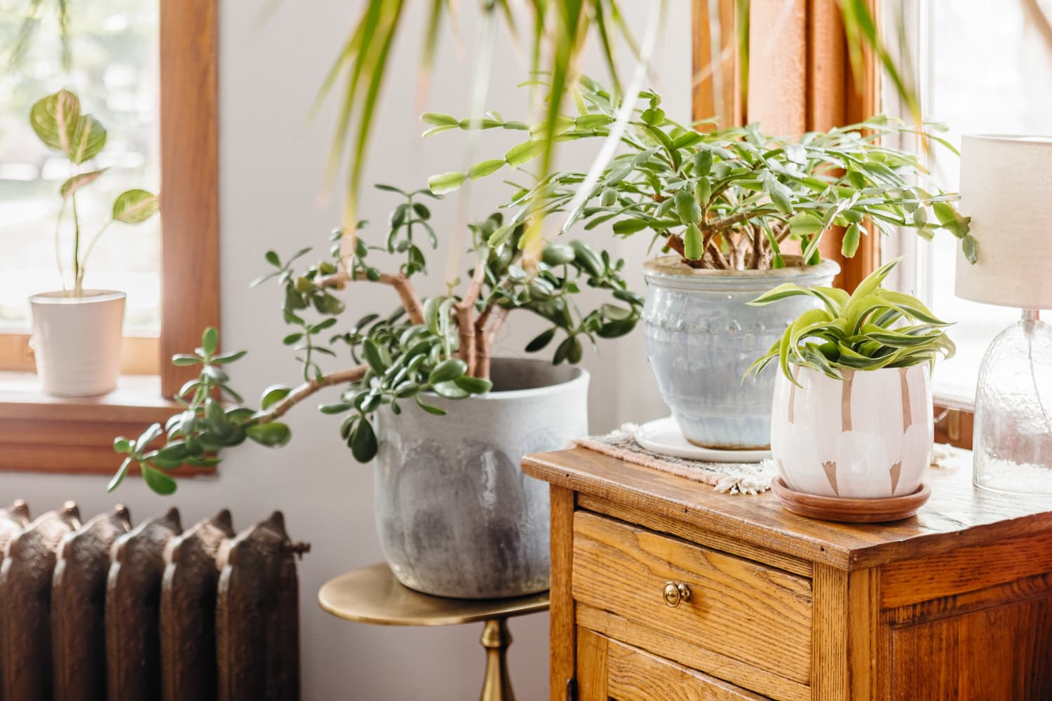 2 Things You Should Never Do as a New Plant Parent if You Want Healthy Houseplants
