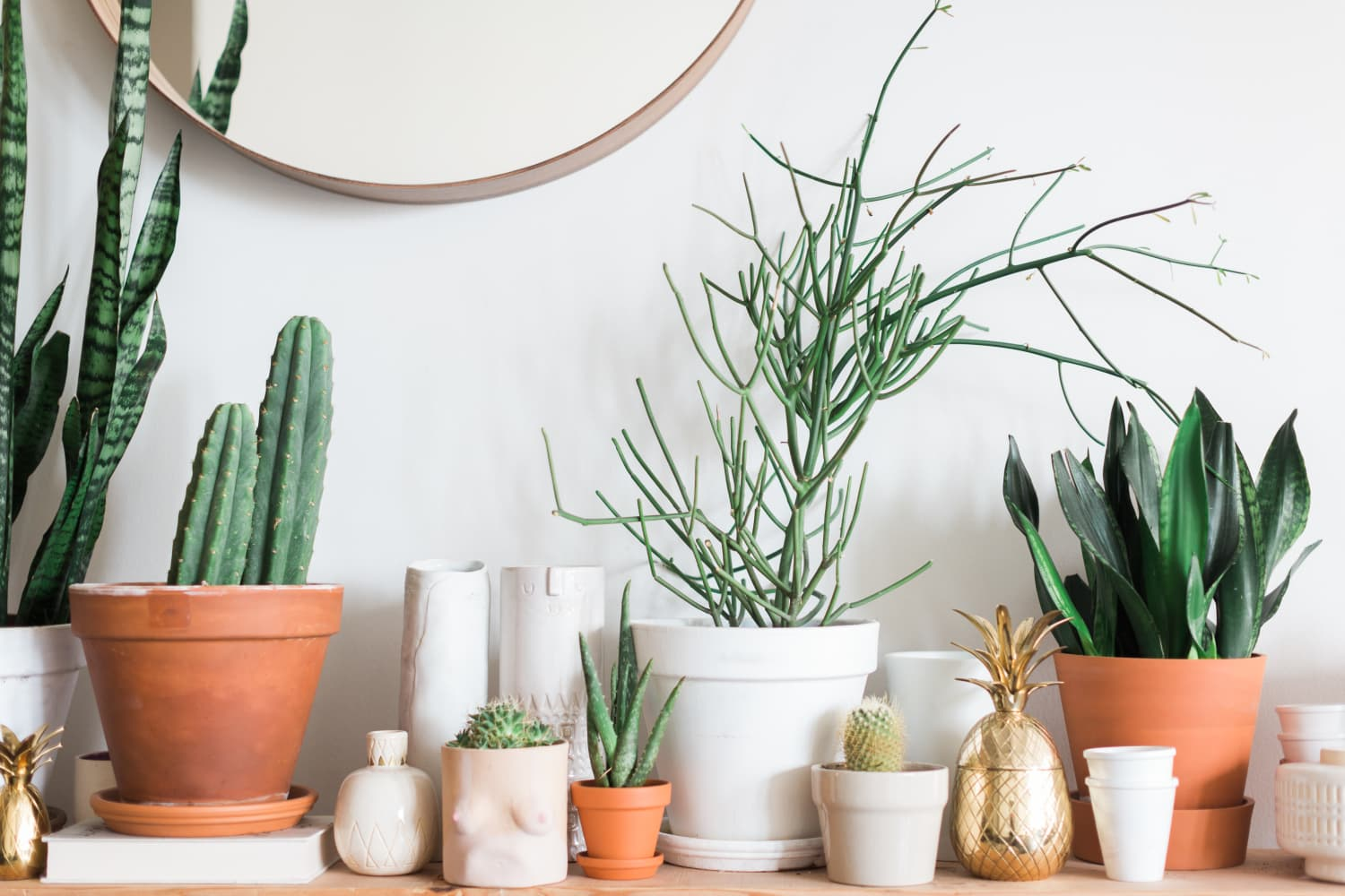 6 Plants You Barely Need to Water