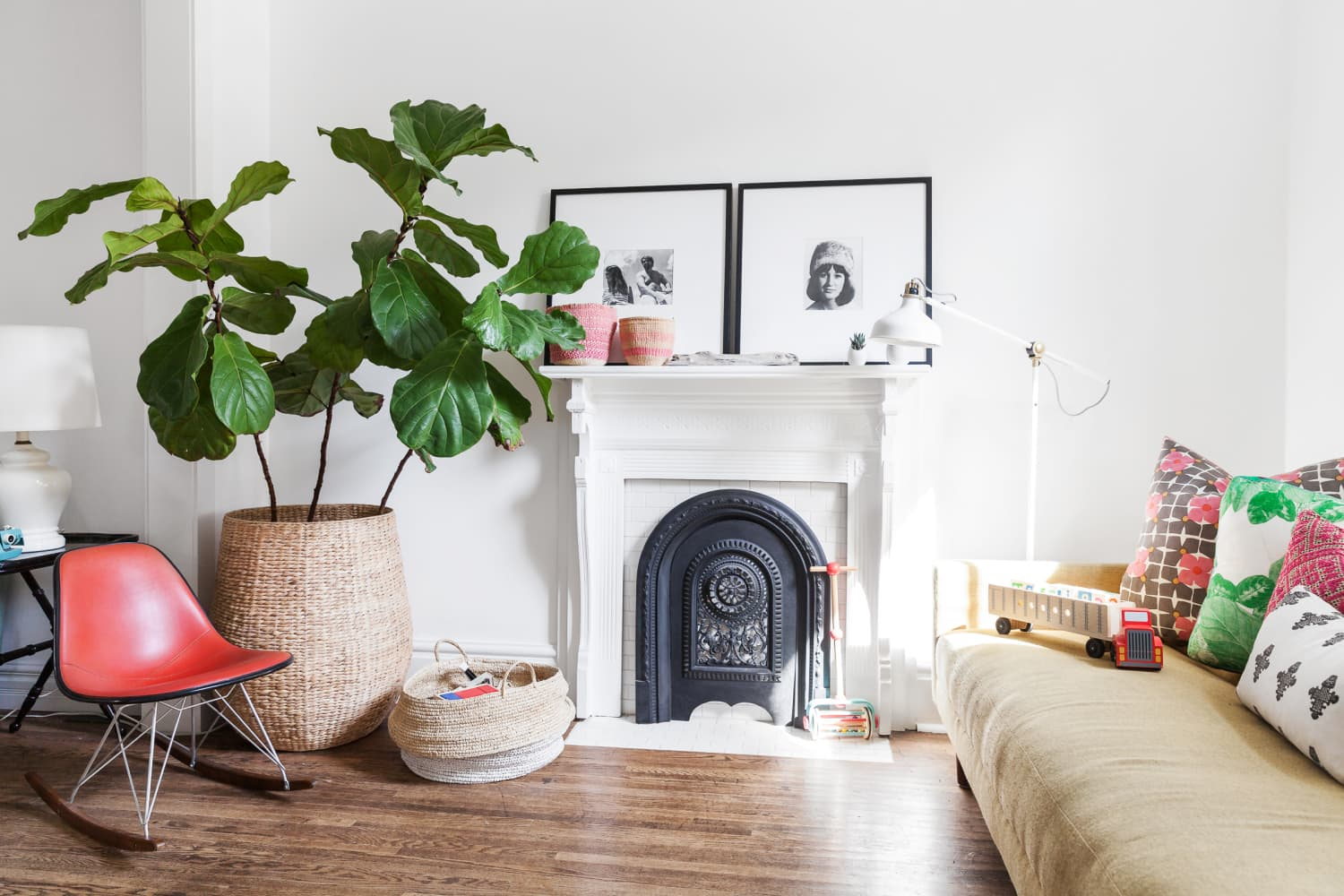 5 of the Best XXL Houseplants to Splurge on for Big-Impact Style