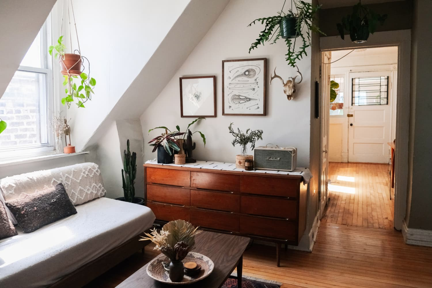 A Small Chicago Apartment Has Skylights in the Kitchen and 70+ Very Happy Houseplants