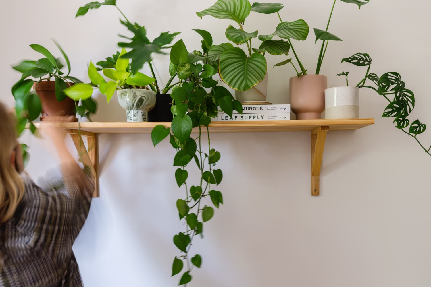 If You Want Healthy Plants, Do This Plant Expert-Approved Simple Task Every Day