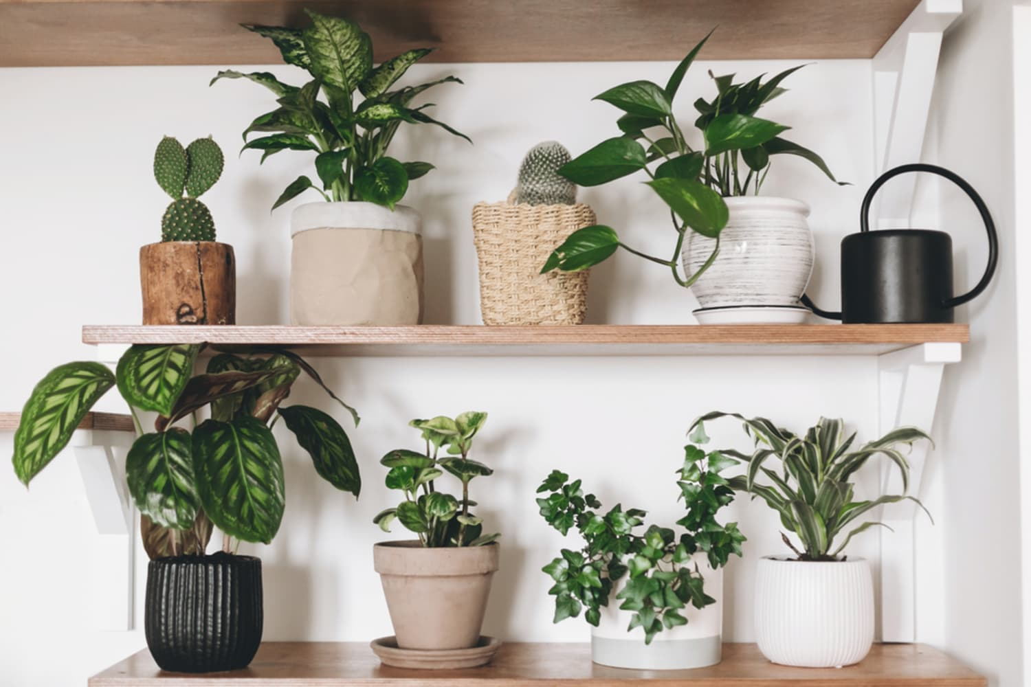Houseplants  cover image