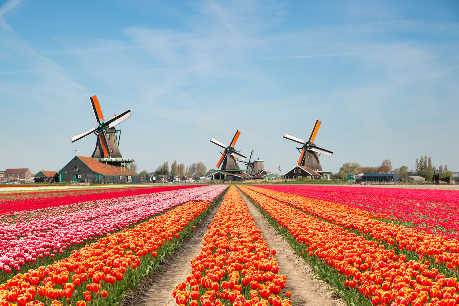 See Holland's Famous Tulips in Bloom on This Virtual Tour of the Keukenhof Gardens