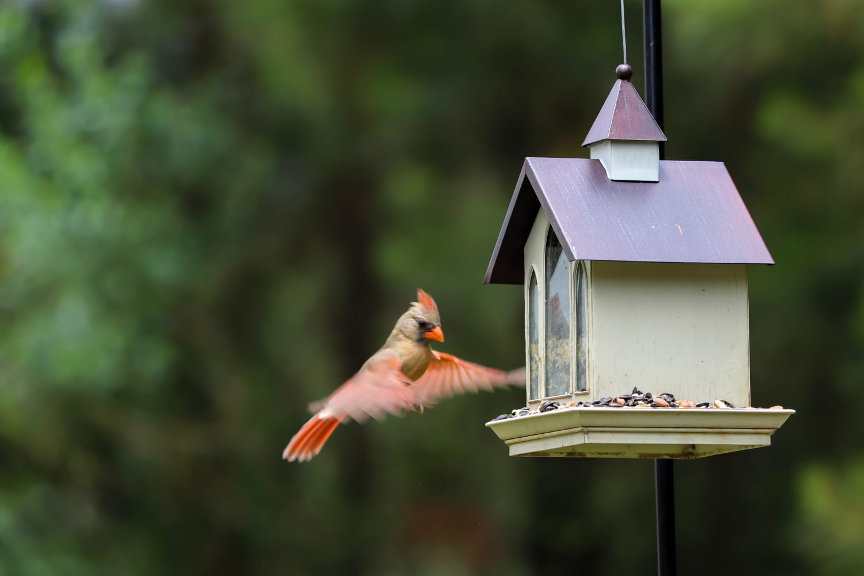 Take Beautiful Close-Up Nature Photos With This Smart Bird Feeder