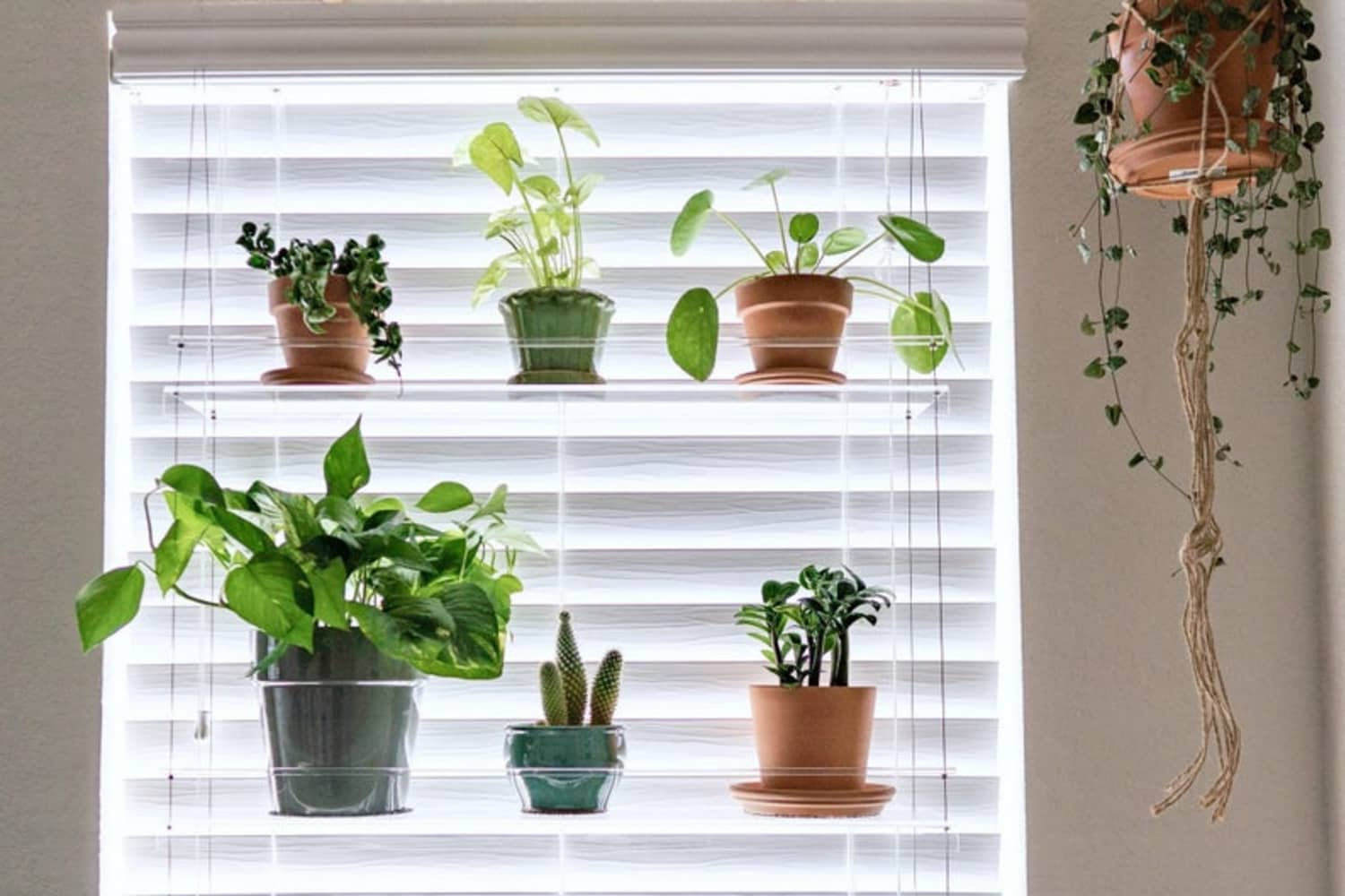 Window Plant Shelf Clear Etsy Apartment Therapy