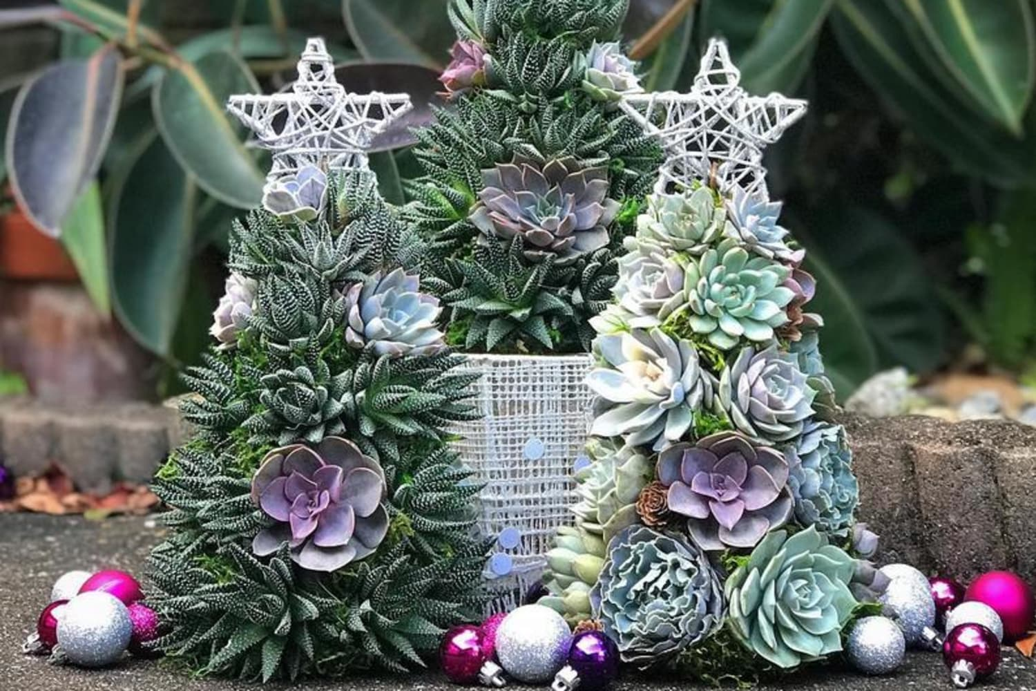 Succulent Christmas Trees Are the Perfect Holiday Trend for Plant Lovers