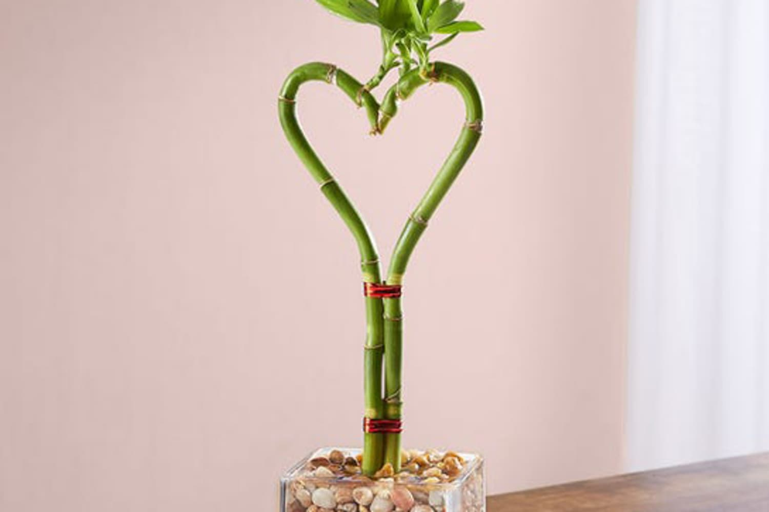 This Heart-Shaped Bamboo Is Perfect for Your Plant-Loving Valentine