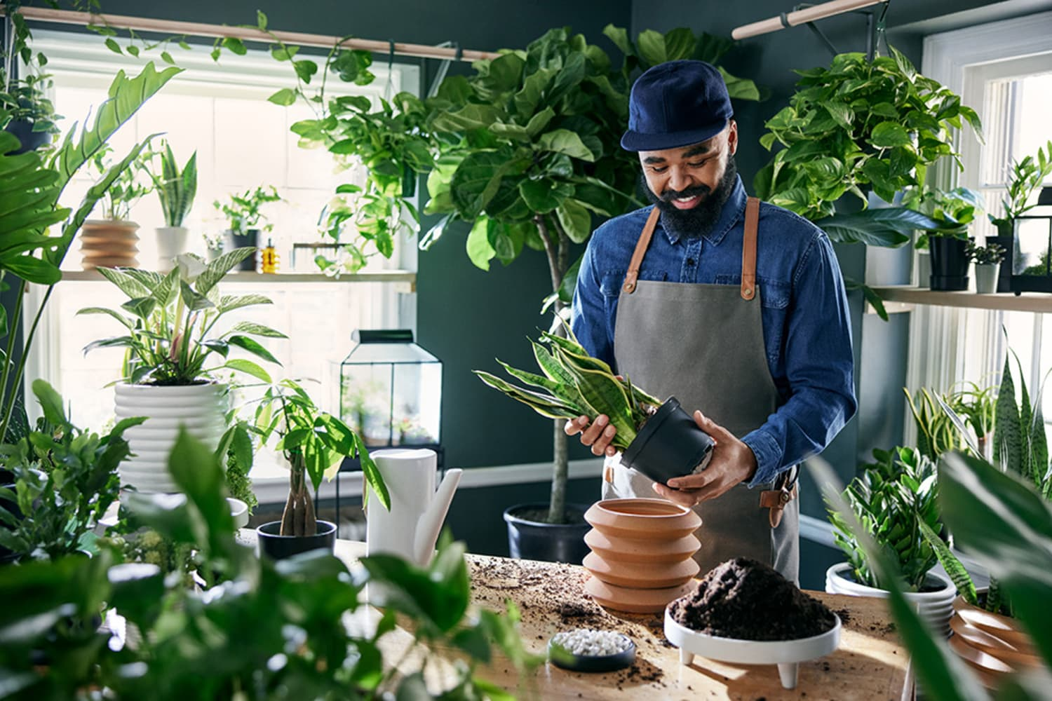 Hilton Carter's Plant Collection at Target Is Basically Kill-Proof — and You Can Buy a Houseplant Starting at $5