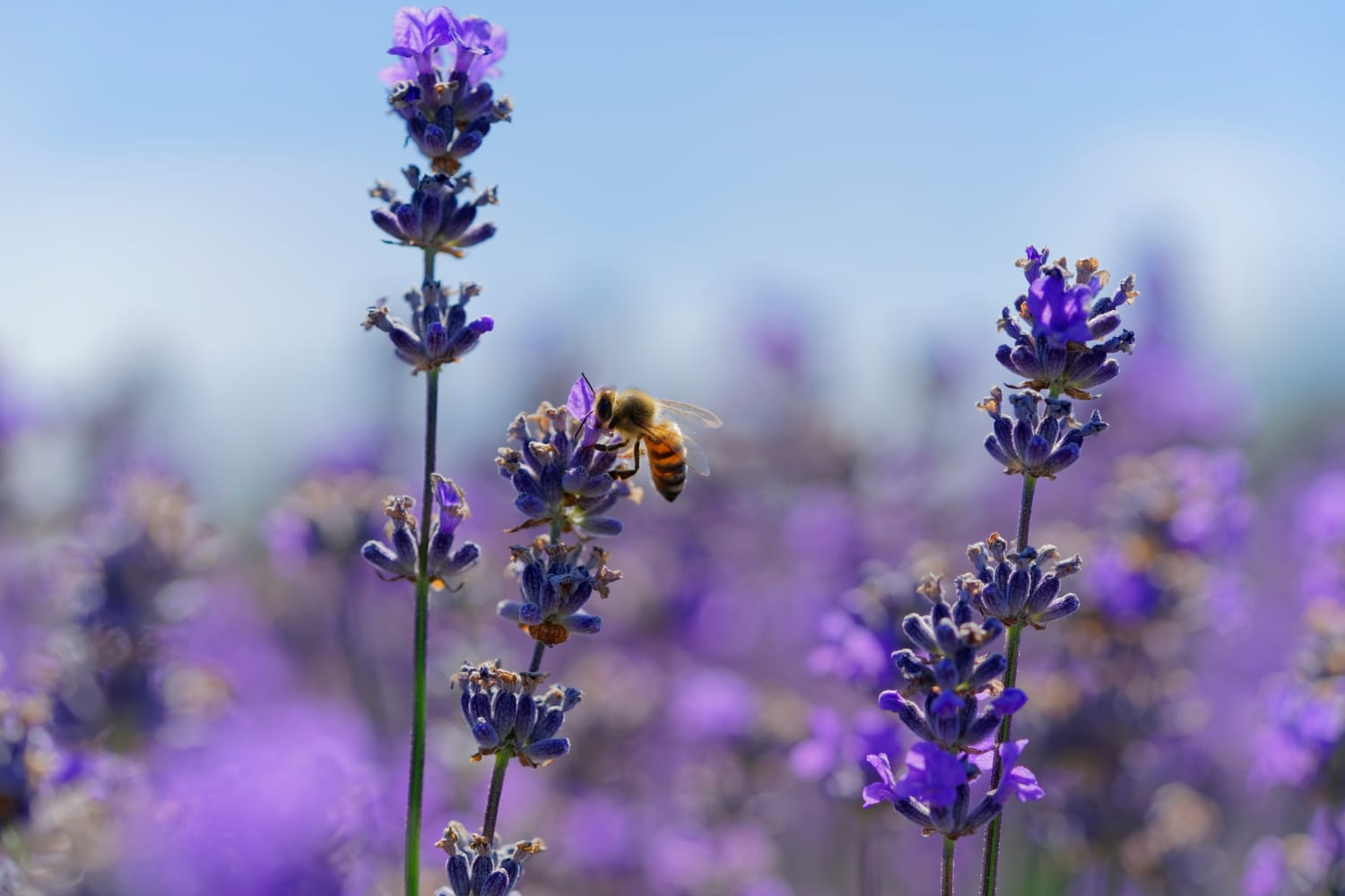 The Best Autumn Flowers To Help Bees, According To Experts