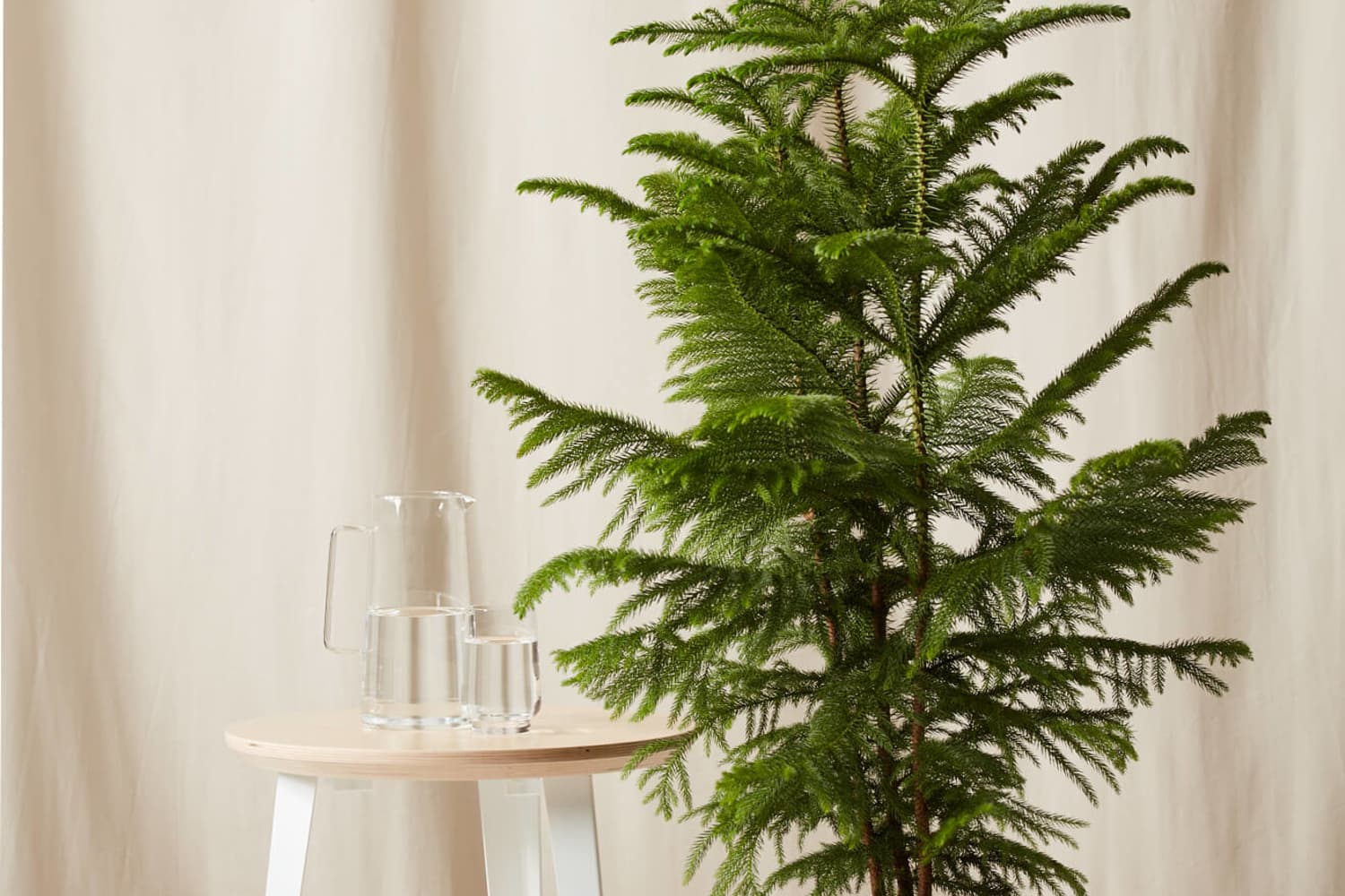 You Can Keep Your Christmas Tree Year-Round With These Potted Evergreens