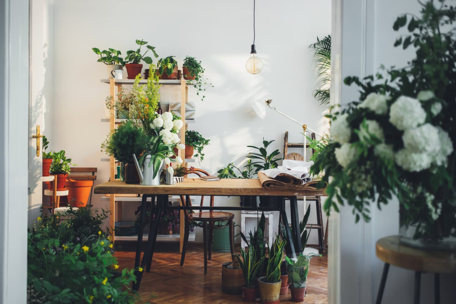 I Lost My Entire 30+ Plant Collection — Here Are 5 Ways I'm Rebuilding It Differently