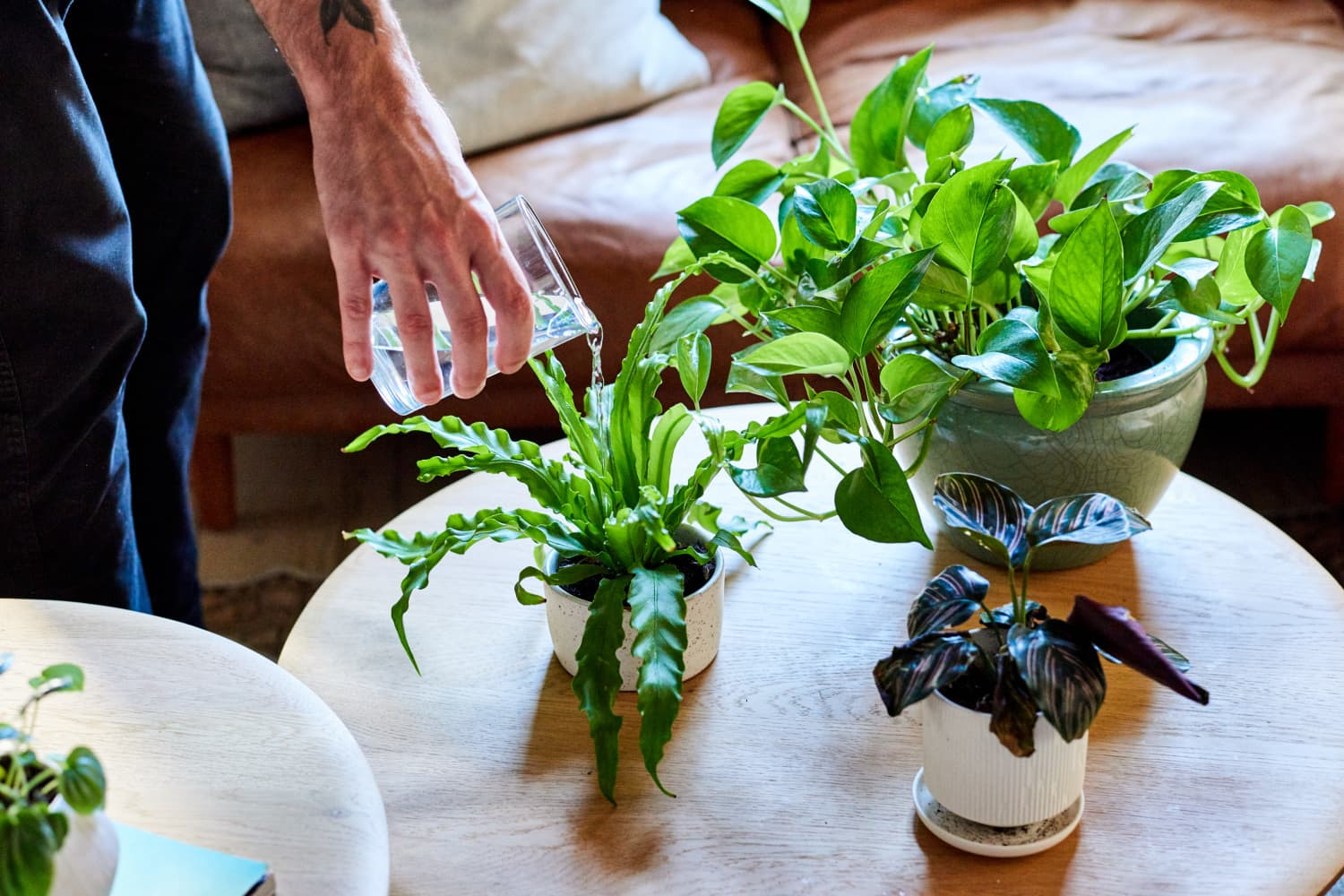 This Smart Planter Wants to Cure All Your Plant Parent Woes