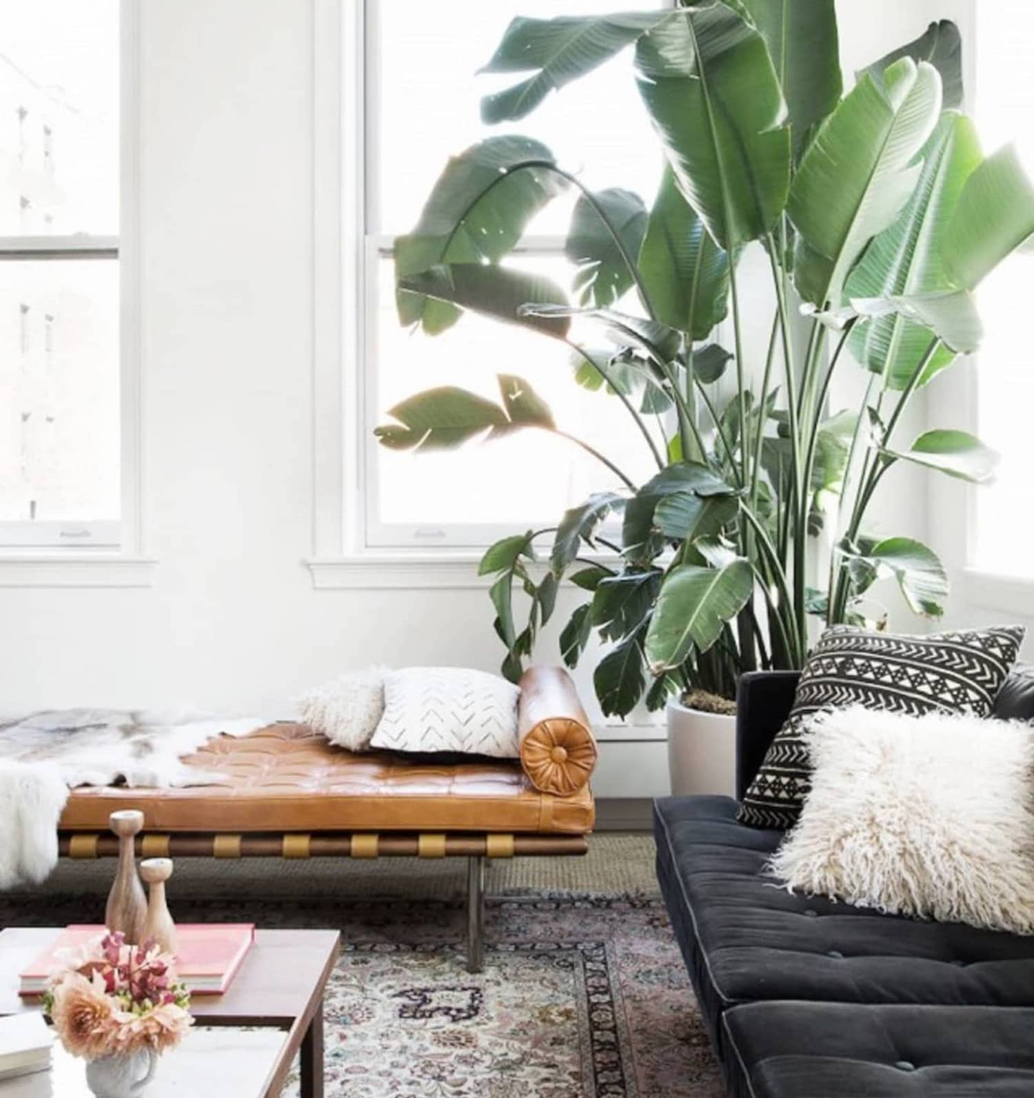 Image of: 12 Best Indoor Trees Large Floor Plants For A Bold Statement Apartment Therapy