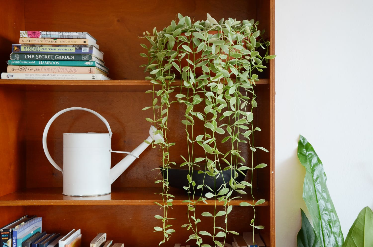 This Popular TikTok Shares the Most Stress-Free Way To Water Houseplants
