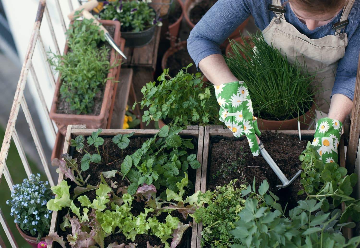14 Foods You Can Re-Grow from Kitchen Scraps