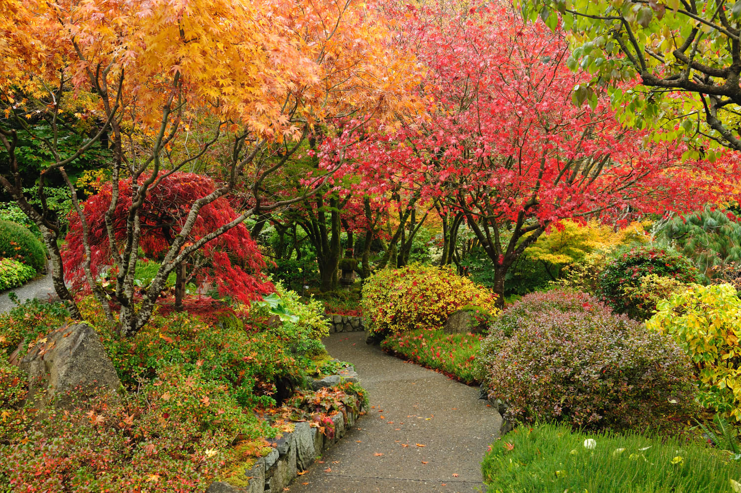 What to Plant in October to Fill Your Garden with Color Next Spring