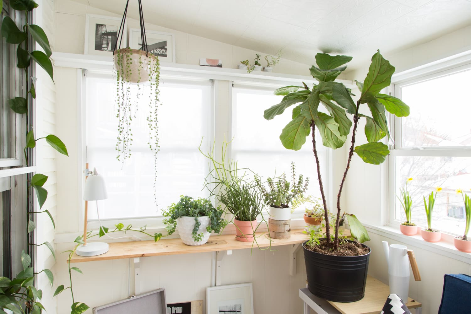Bloomscape Just Launched New Tools That'll Make Anyone a Great Plant Parent