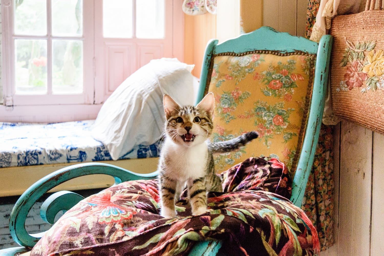 Popular Cat Names 2019 Apartment Therapy