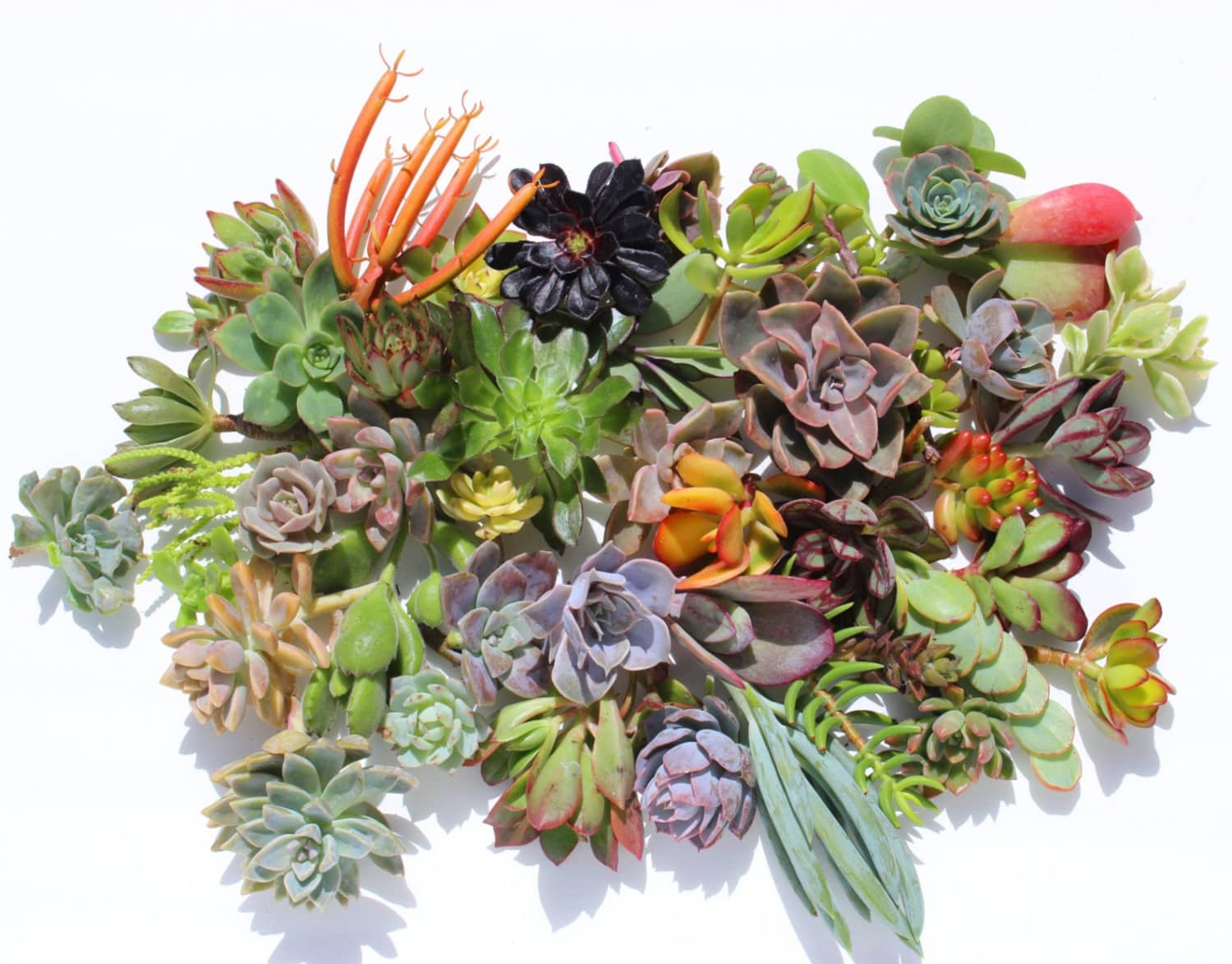 Etsy Has a Succulent Starter Kit That Will Delight Plant Parents
