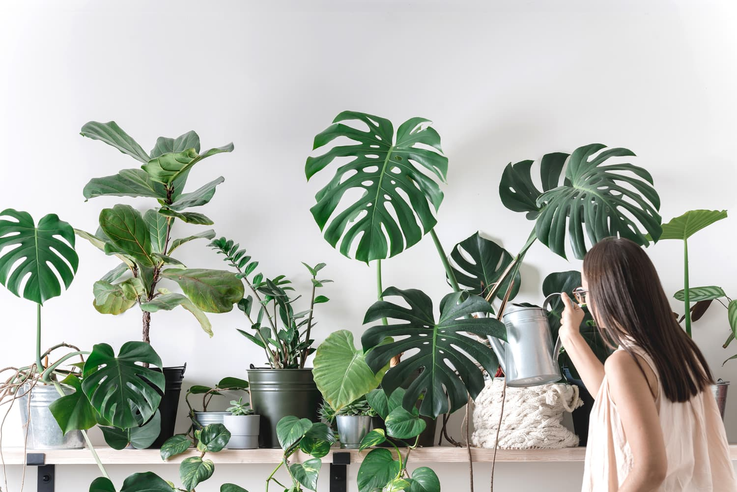 These Are the 9 Most Popular Houseplants on Instagram, According to Survey