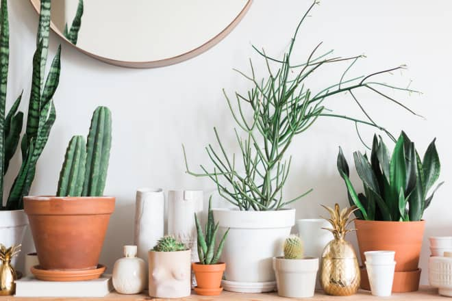 There's a Critical Part of Plant Shopping that Most People Skip
