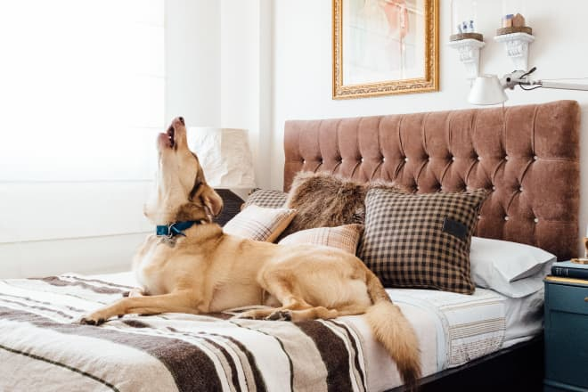 5 Things People Renting with Pets Should Never Do