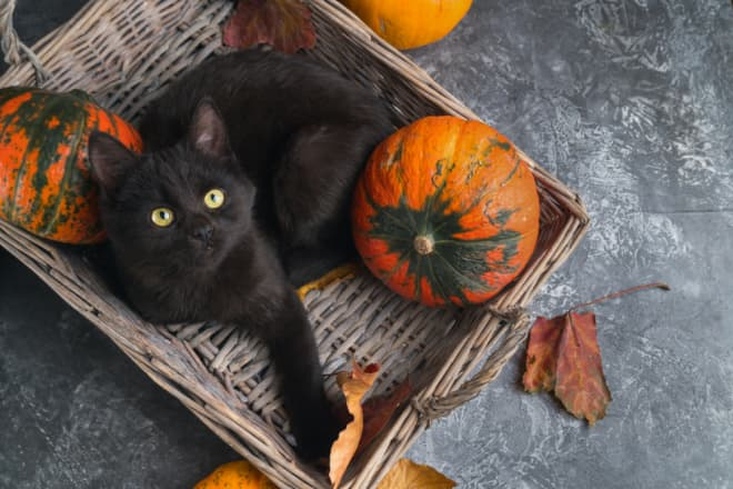 This Pumpkin Cat Bed Lets Your Kitty Celebrate Halloween, Too