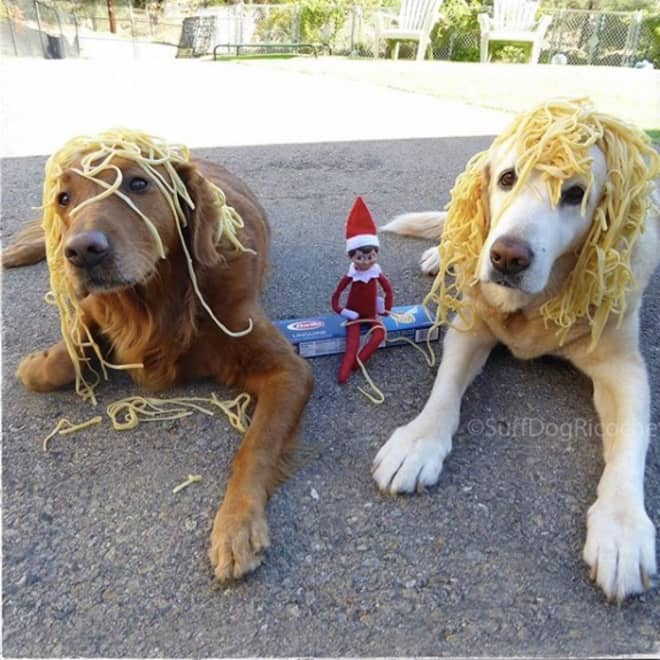 These Photos Show a Prank War Between an Elf on the Shelf and Two Golden Retrievers