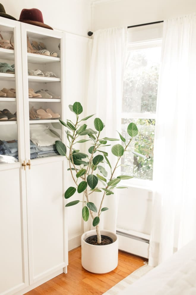 Ficus Audrey is 2020's Fiddle-Leaf Fig Tree, According to Plant Experts