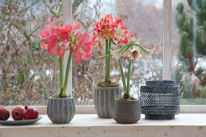 How to Force Bulbs So They Bloom Indoors Any Time of Year