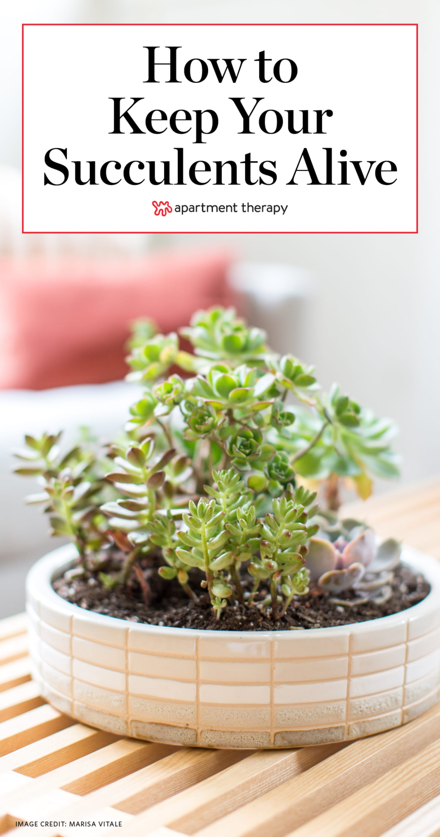 Succulent Care How To Grow Succulents Apartment Therapy