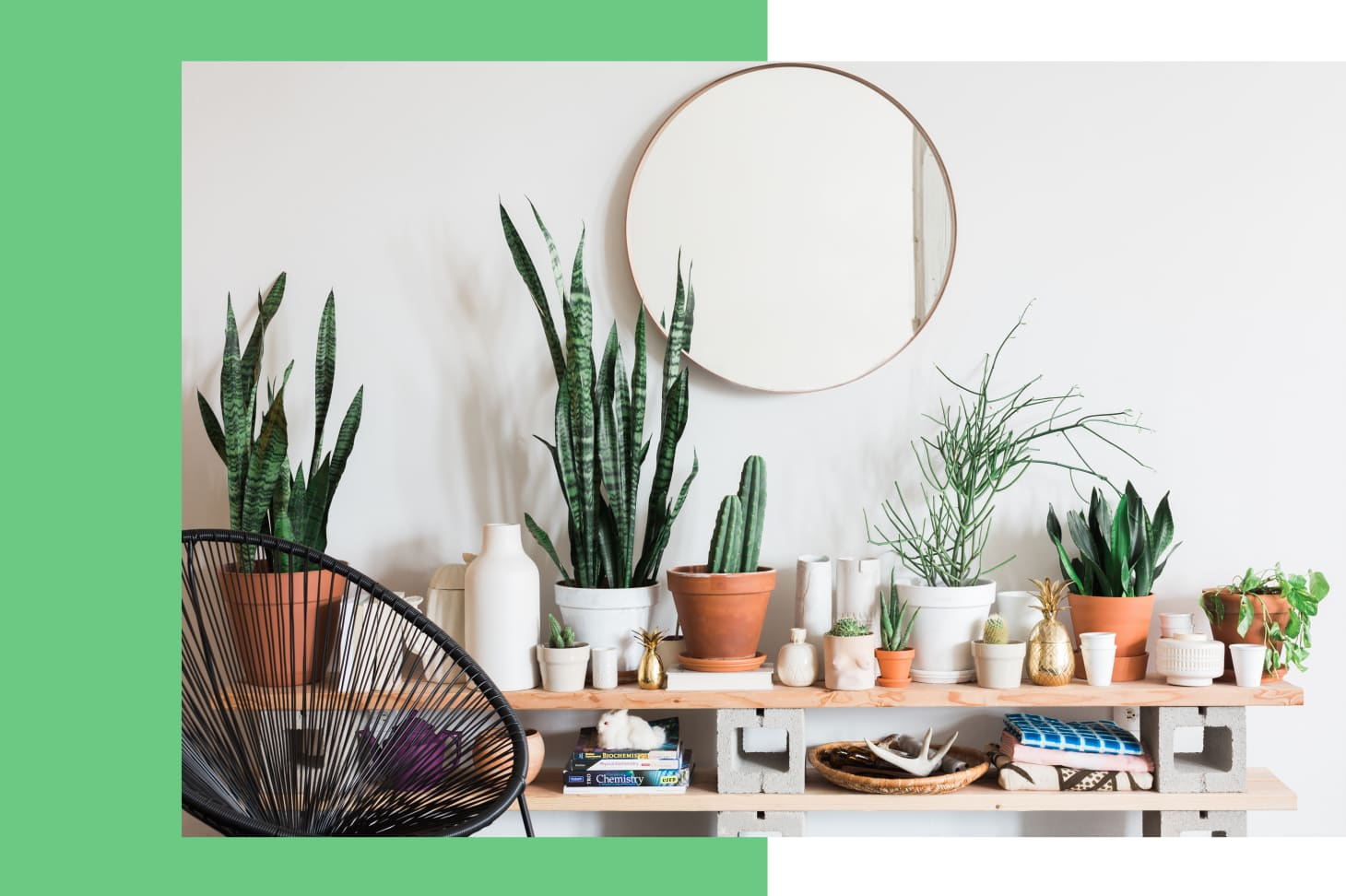 How to Take Care of Plants | Apartment Therapy House Plant Chart on weed chart, house paint chart, house color chart, vegetables chart, fish chart, house cat chart, poisonous plants chart, house garden chart, fern chart, house building chart, flower chart, bird chart, house animals chart, apple chart, herb chart,