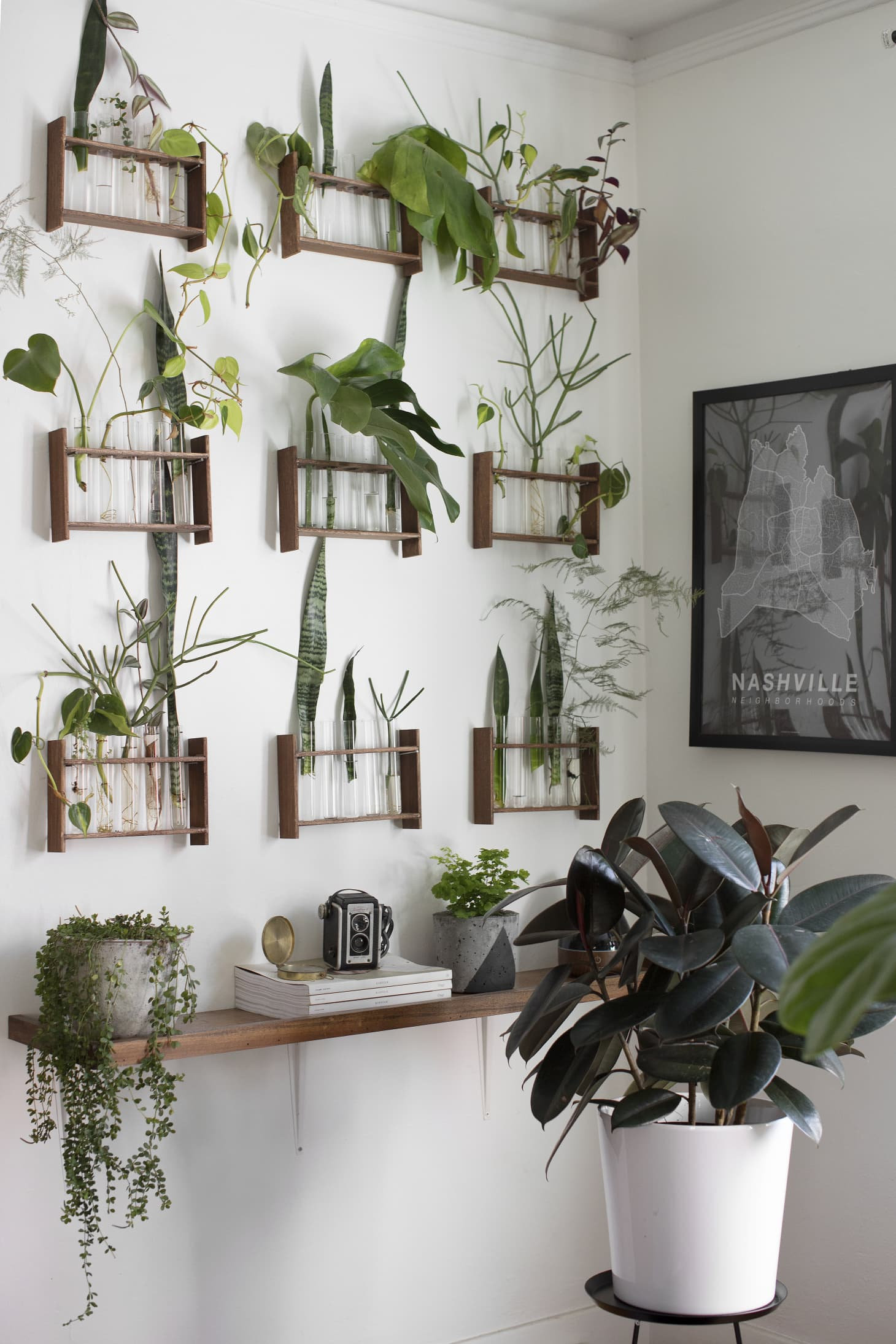 How to Display Houseplants: 65 of Our Favorite Plant ...
