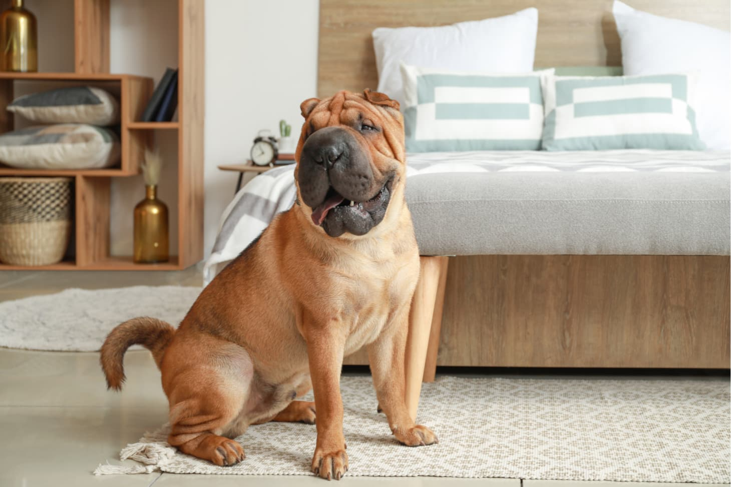 21 Best Apartment Dogs - Good Dog Breeds for Small ...