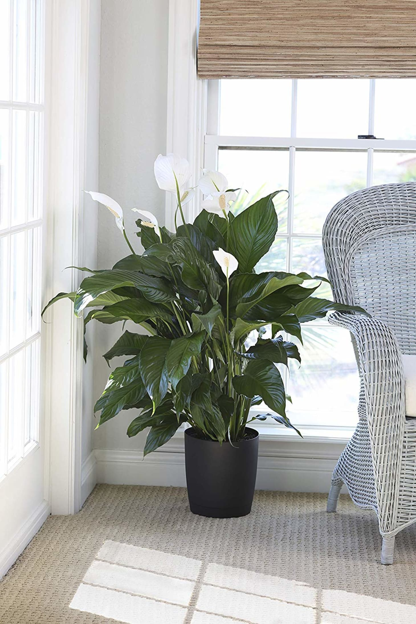 Amazon Is Having a Sale on Live Plants | Apartment Therapy