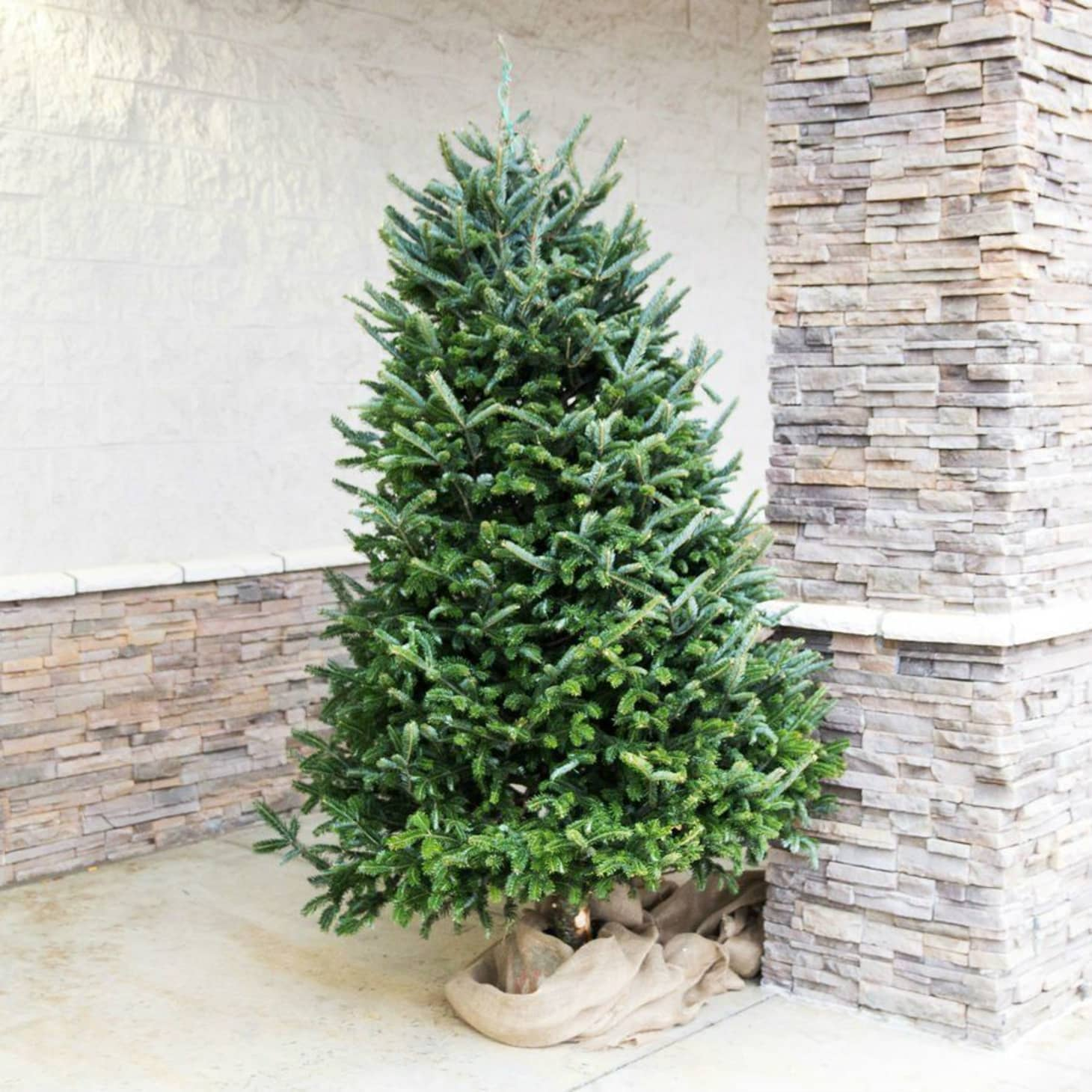 4 Places to Buy Live Christmas Trees Online - Walmart ...