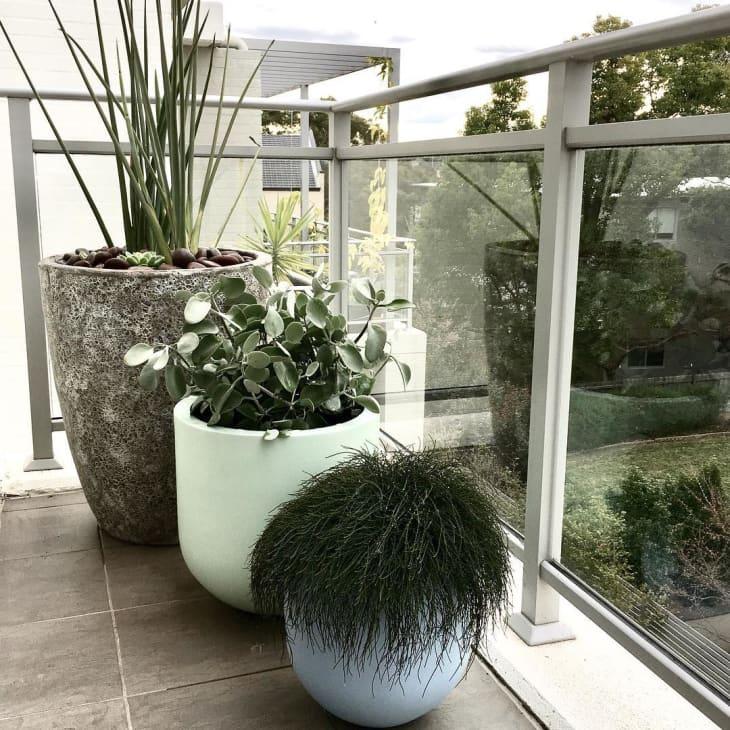10 Balcony Garden Ideas - How to Grow Plants on a Small ...