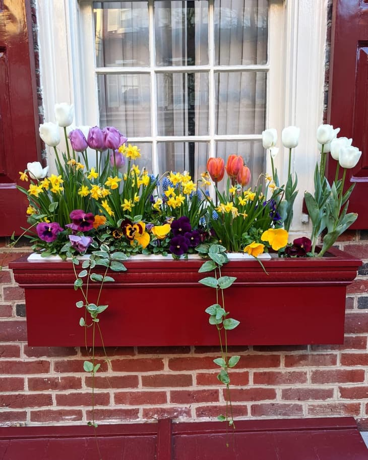 20 Window Box Flower Ideas What Flowers To Plant In Window Boxes Apartment Therapy