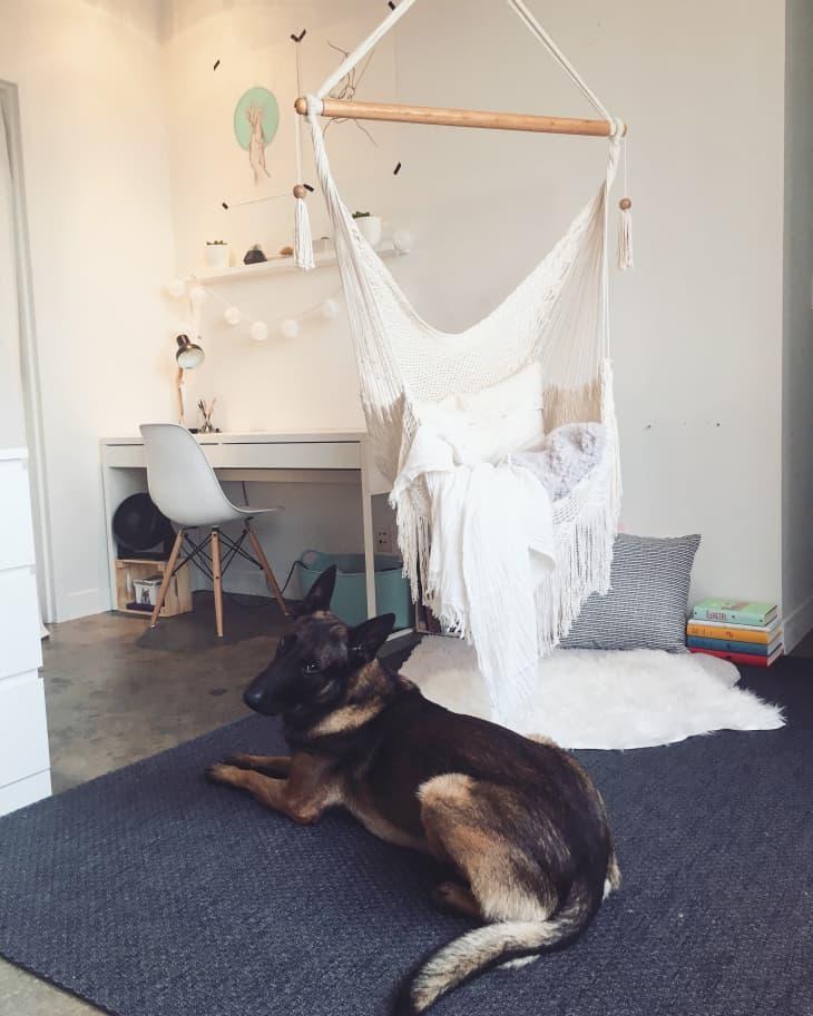 Smart Dog IKEA Hack in a Dallas Condo | Apartment Therapy