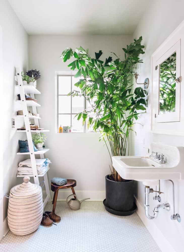 鱼尾棕榈树作为白色浴室的焦点