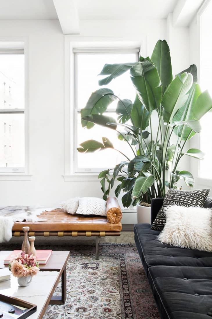 在波西米别致的客厅里面的植物鸟