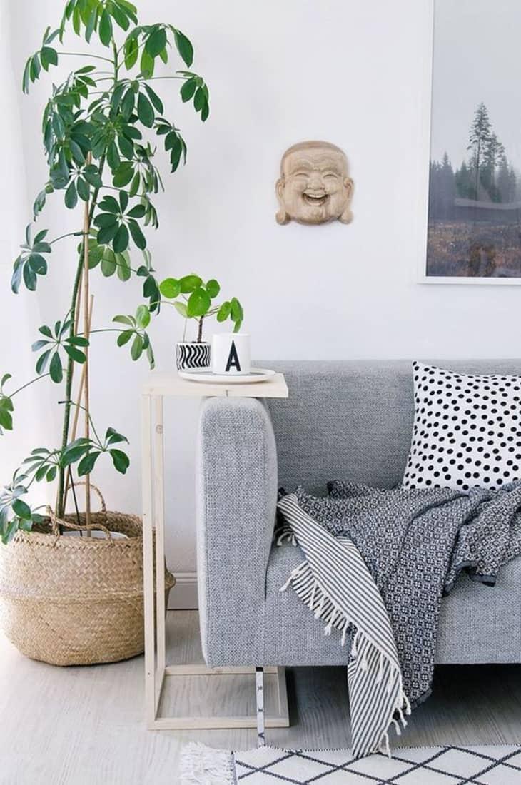 舍弗勒拉植物旁边的边桌和沙发