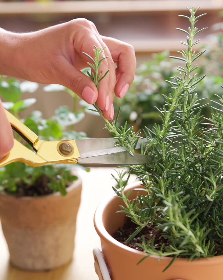 10 Easiest Herbs to Grow - Best Herbs for Fast, Easy Growth | Apartment  Therapy