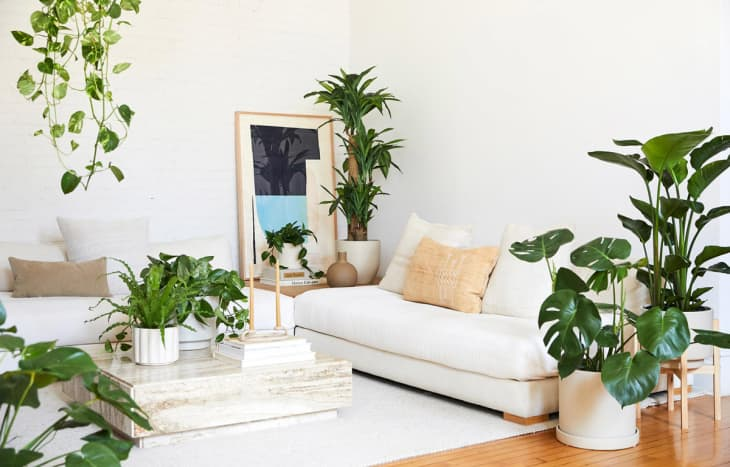 How To Decorate With Faux Plants How To Mix Real And Faux Plants Apartment Therapy