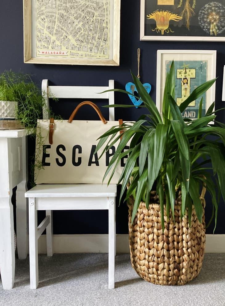 植物旁边的白色椅子,上面有框架艺术品